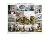 Crustacea and Reptiles  C1850