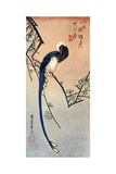 Long Tailed Blue Bird on Branch of Plum Tree in Blossom  19th Century