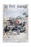 Ostriches Attacking a Car  California  USA  1904