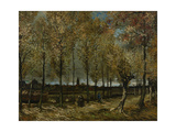 Poplars Near Nuenen  1885