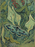 Green Peacock Moth (The Emperor Mot), 1889 Giclée par Vincent Van Gogh