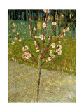 Almond Tree in Blossom, 1888 Giclée par Vincent Van Gogh