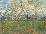 The Pink Orchard  1888