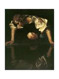 Narcissus  1598-1599