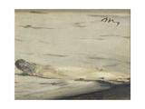 Asparagus  1880