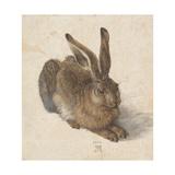 Hare  1502