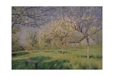 Apple Trees Blooming  C 1895