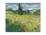 Green Wheat Field with Cypress Giclée par Vincent Van Gogh