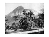 Botanical Gardens and Mount Corcovado  Rio De Janeiro  Brazil  1893
