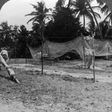 Fishermen Drying their Nets on the Beach  Basseterre  St Christopher  West Indies
