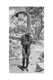 An Emu Man Performing the Sacred Totem of His Group  Australia  1922