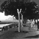 The Road to the Pyramids  Giza  Egypt  1905