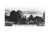 The Botanical Gardens  Hobart  Tasmania  1928