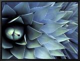 Pattern in Agave Cactus Tableau sur toile encadré par Adam Jones