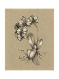 Botanical Sketch Black and White V