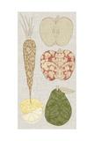 Contour Fruits and Veggies VII