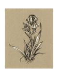 Botanical Sketch Black and White VI