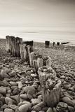 Weathered Wooden Groyne on Bossington Beach at Sunset  Exmoor National Park  Somerset
