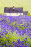 Lavender Fields, Cotswolds, Worcestershire, England, UK Papier Photo par Nadia Isakova