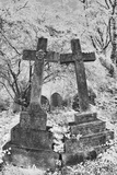 Infrared Image of the Graves in Highgate Cemetery  London  England  UK