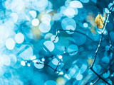 Rainy Flora in Bright Blue Light