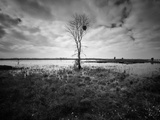 Moody Marsh Tree in Black and White  Central California