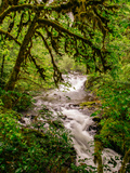 Sweet Creek Flowing Through The Forest  Oregon Coast
