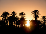 Palm Silhouettes over Sunset in the Desert Zagora  Morocco  Africa