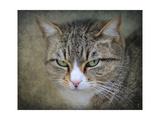 Gray Tabby Cat Portrait