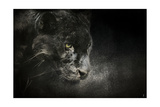 Out of the Shadows Black Leopard