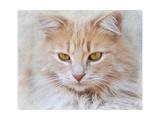 Orange Tabby Cat Portrait
