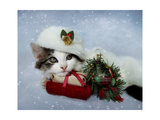 Christmas Kitten in the Snow