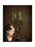 Cat and the Candelabra