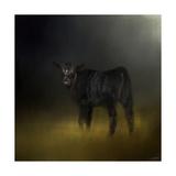 Black Angus Calf in the Moonlight Giclée par Jai Johnson