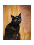 Royal Kitten