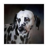 The Firemans Dog Dalmatian