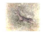 Run Like the Wind White Tailed Buck