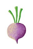 Purple Turnip