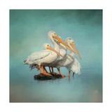We are Family White Pelicans