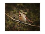 Anticipating Winter Cardinal 2
