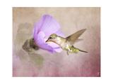 A Taste of Nectar Hummingbird