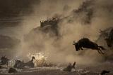 The Great Wildebeest Migration Papier Photo par Adrian Wray
