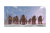 A Herd of Columbian Mammoths Migrate to a Warmer Climate
