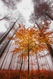 Autumnal tints Papier Photo par Philippe Sainte-Laudy