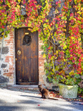Italy  Tuscany  Contignano a Wooden Door Surrounded by Fall and Cat