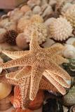 Seashells for Sale Zihuatanejo  Mexico