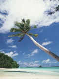 Palau  Palm Trees Along Tropical Beach