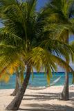 Palm Trees and Hammock at Seven Mile Beach, Grand Cayman, West Indies Papier Photo par Brian Jannsen