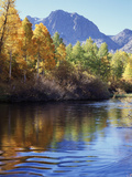 California  Sierra Nevada  Inyo Nf  Autumn Aspen Reflect in Rush Creek