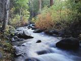 California  Sierra Nevada  Inyo Nf  Lee Vining Creek Through Forest